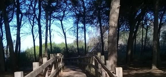Percorso non vedenti Parco Naturale di  Gallipoli  (7)
