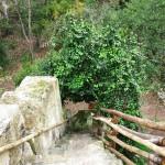 Foresta Urbana Lecce (1)