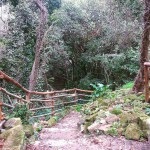 Foresta Urbana Lecce (2)
