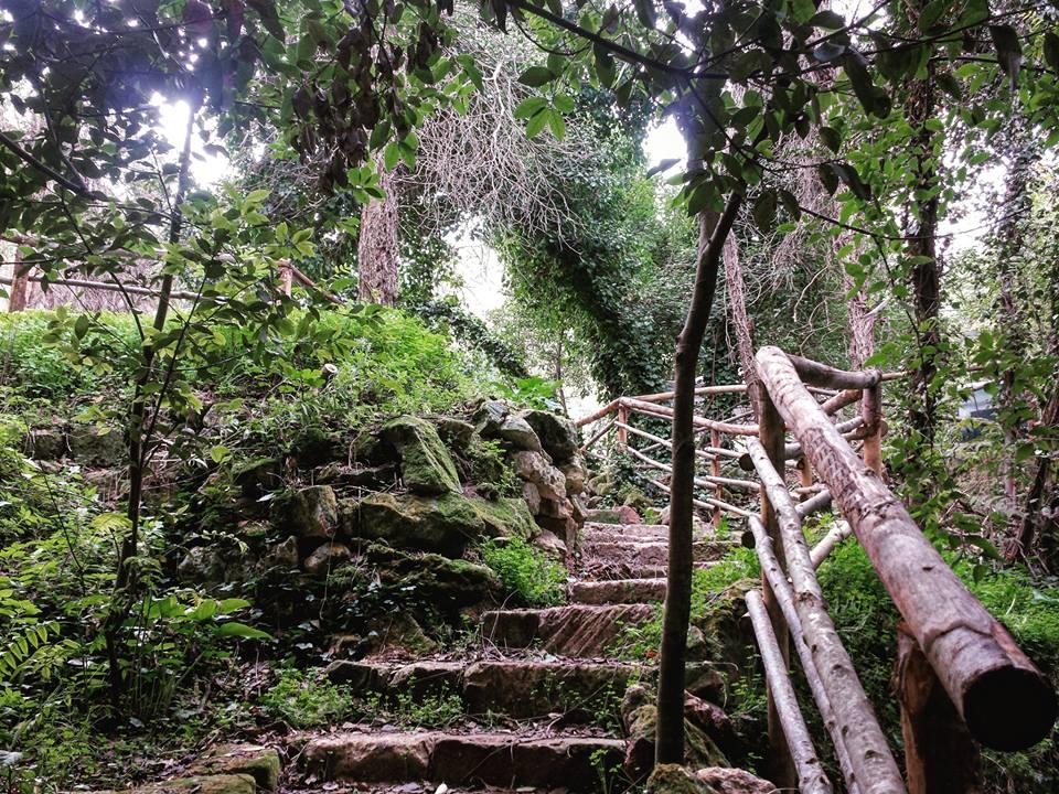 Risultati immagini per immagini foresta urbana lecce