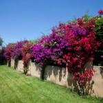 masseria-li-foggi-salentourist-case-vacanza (10)