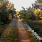 strada romana Lecce 4