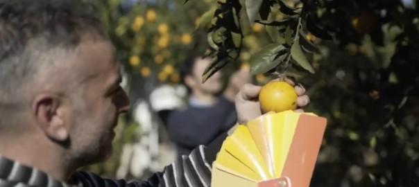 Ospite Puglia 1